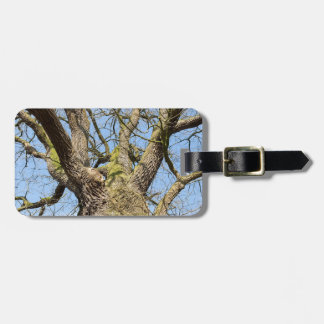 Bottom view oak tree without leaves in winter luggage tag