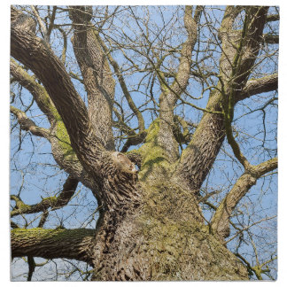 Bottom view oak tree without leaves in winter napkin
