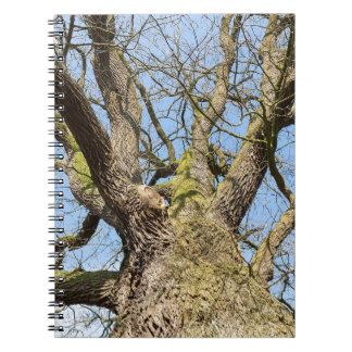 Bottom view oak tree without leaves in winter notebook