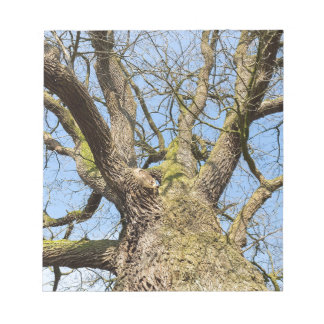 Bottom view oak tree without leaves in winter notepad