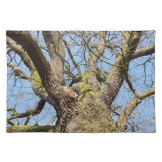 Bottom view oak tree without leaves in winter placemat