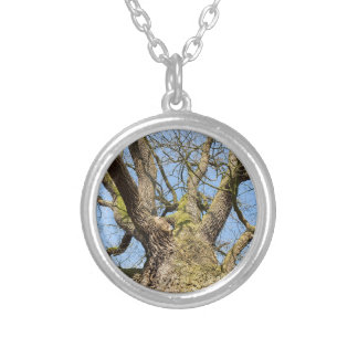 Bottom view oak tree without leaves in winter silver plated necklace