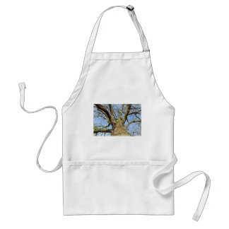 Bottom view oak tree without leaves in winter standard apron
