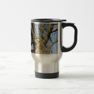 Bottom view oak tree without leaves in winter travel mug