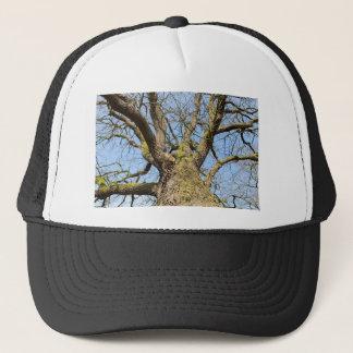 Bottom view oak tree without leaves in winter trucker hat