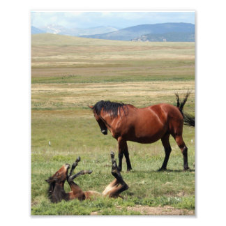 Bottoms Up Young Horse Photo Print