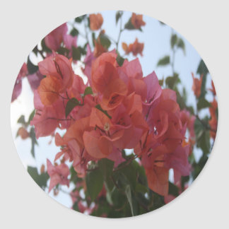 Bougainvillea At Daybreak Classic Round Sticker