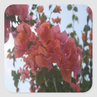 Bougainvillea At Daybreak Square Sticker