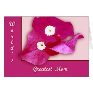 Bougainvillea Blossom Cards