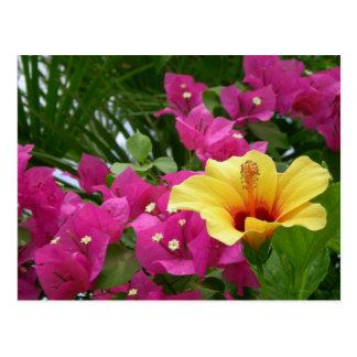 Bougainvillea & Hibiscus Postcard