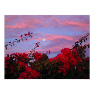 Bougainvilleas and Full Moon at Sunset Poster