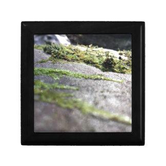 Boulder Lichen Gift Box