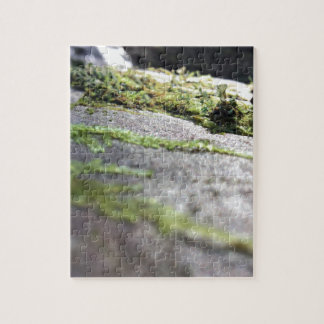 Boulder Lichen Puzzles