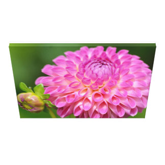 Bountiful Pink Dahlia and Bud Canvas
