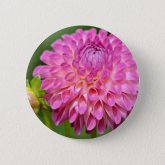 Bountiful Pink Dahlia and Bud Poster 2 Inch Round Button