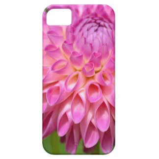 Bountiful Pink Dahlia and Bud Poster Case For The iPhone 5