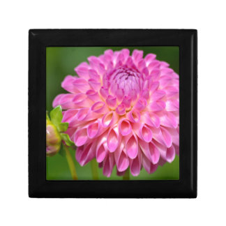 Bountiful Pink Dahlia and Bud Poster Gift Box