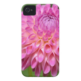 Bountiful Pink Dahlia and Bud Poster iPhone 4 Case