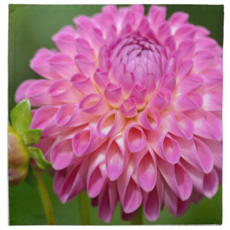 Bountiful Pink Dahlia and Bud Poster Napkin