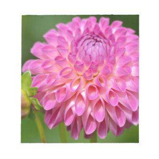 Bountiful Pink Dahlia and Bud Poster Notepad