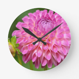 Bountiful Pink Dahlia and Bud Poster Round Clock