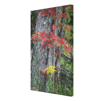 Bounty Of Nature Canvas Print
