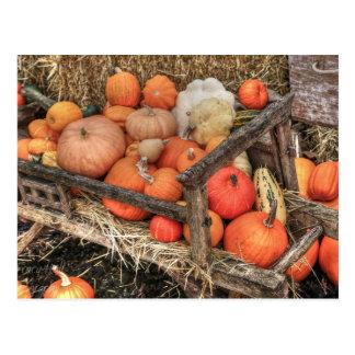 Bounty Pumpkins Postcard