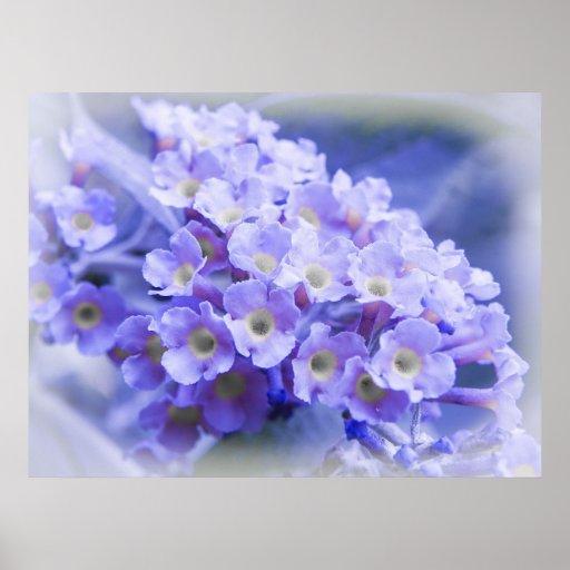 Bouquet of Blues Print