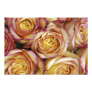 Bouquet of roses photo print
