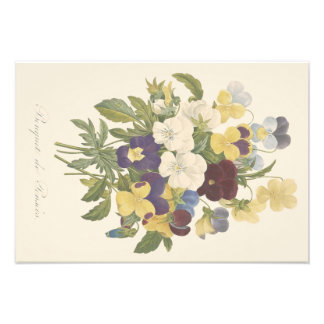 Bouquet Pansy Pansies Flower Illustration Photo Print