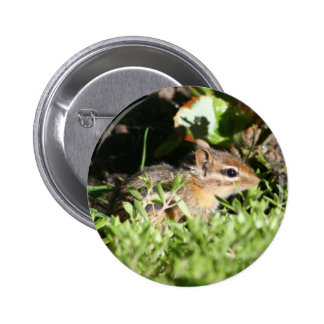 bouton avec la photo de la tamia mignonne macaron rond 5 cm