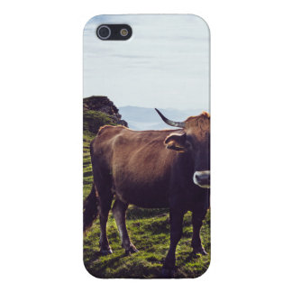 Bovine Cow on Beautiful Landscape iPhone 5 Covers