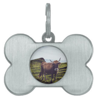 Bovine Cow on Beautiful Landscape Pet Tag