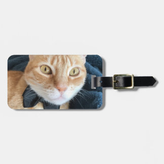 Bow tie cat luggage tag