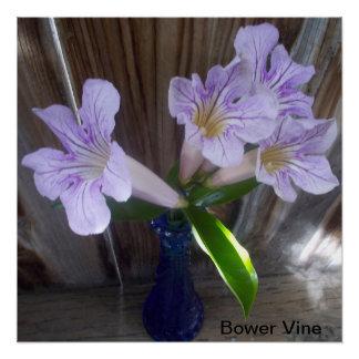 Bower Vine flower blossoms Poster