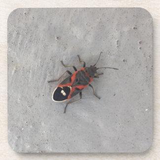 Box Elder Beetle Beverage Coaster