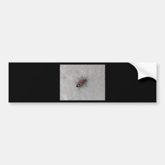 Box Elder Beetle Bumper Sticker