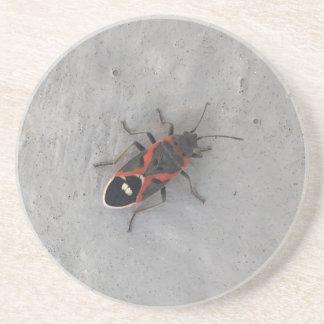 Box Elder Beetle Drink Coasters