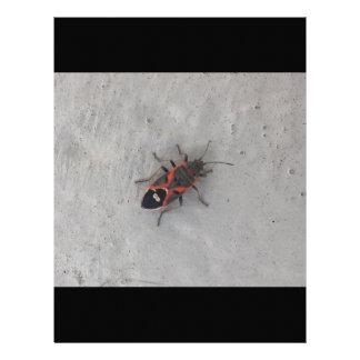 Box Elder Beetle Letterhead