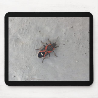 Box Elder Beetle Mouse Pad