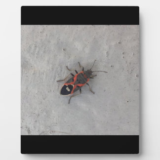 Box Elder Beetle Plaque