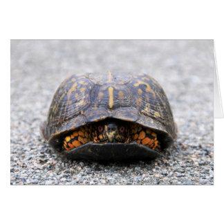 Box Turtle Card