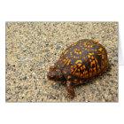 Box Turtle Encouragement Card