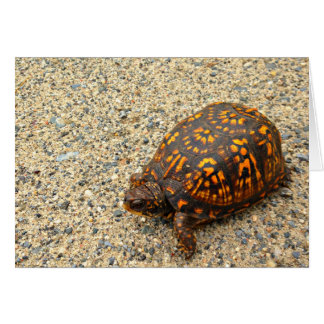 Box Turtle Encouragement Card