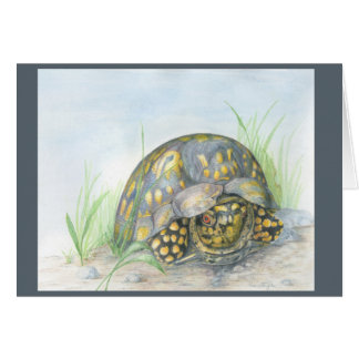 Box Turtle Greeting card. Blank inside. Card