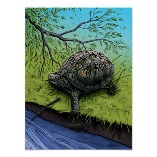 Box Turtle Illustration Poster