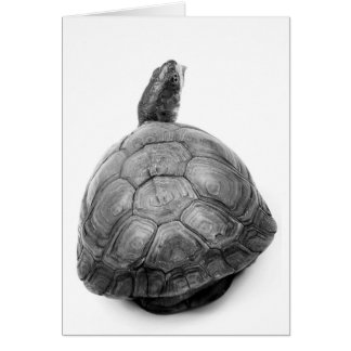 Box Turtle in Black and White Card