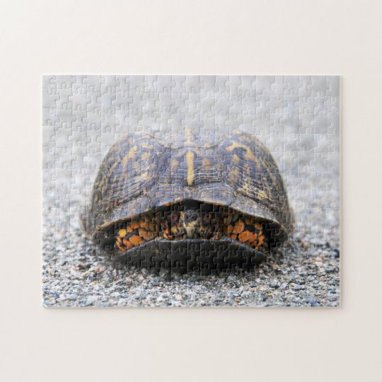 Box Turtle Jigsaw Puzzle
