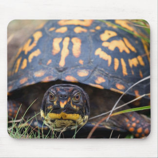 Box Turtle Mouse Pad
