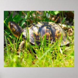 Box Turtle Print